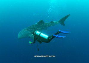 brigitta-whaleshark2marked