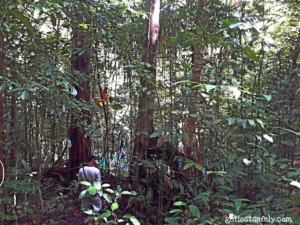 Hutan Tropis di Sekitar Telaga Samares