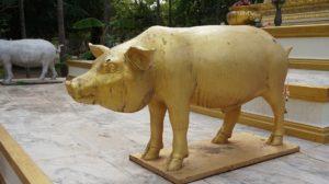 golden-pig