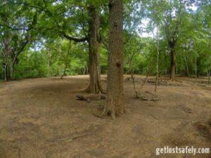 Komodo in nature