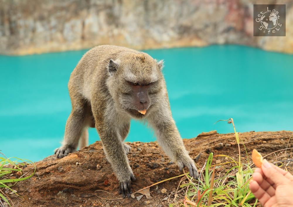 Feeding the wild monkey