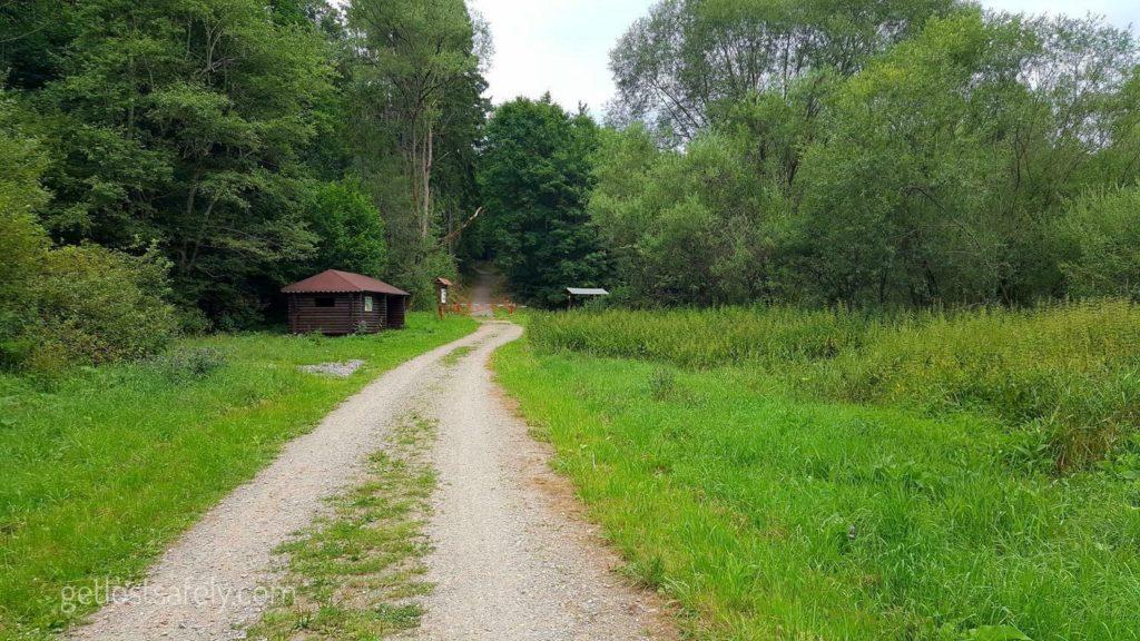 Radesov Forest Czechia