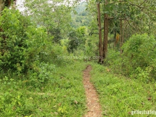Jalan setapak melewati hutan Mbeliling