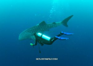 brigitta-whaleshark2marked