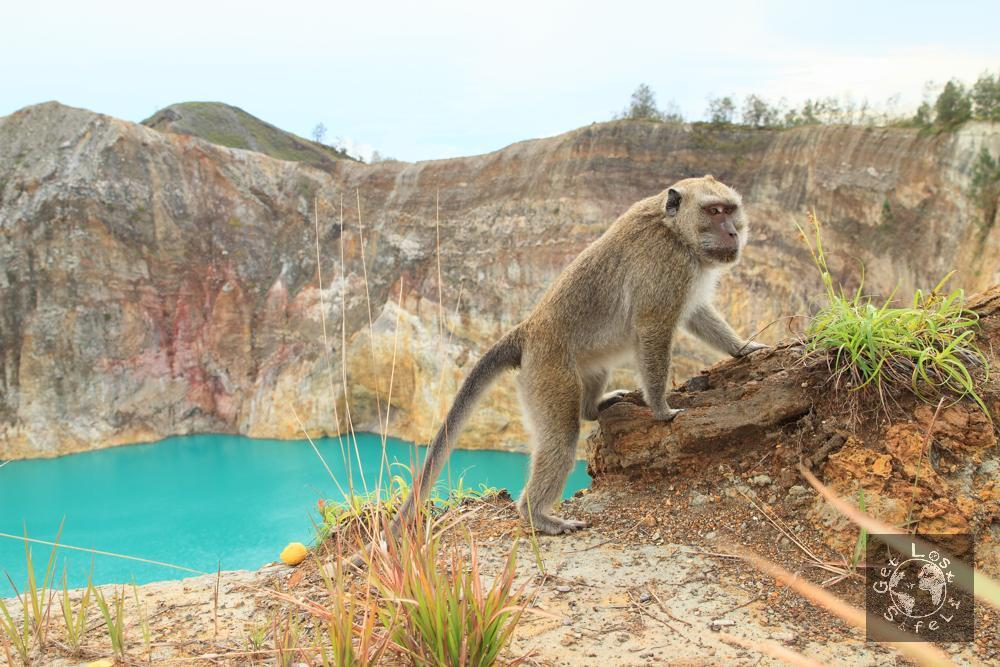 Monyet penunggu danau Alapolo