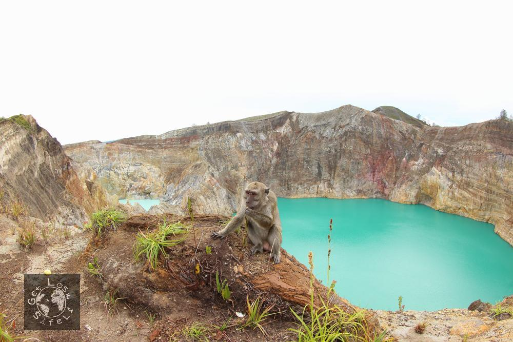 Wild Monkey in Kelimutu