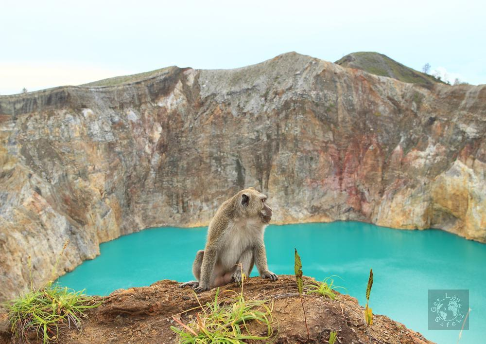 Monkey and the Alapolo Lake