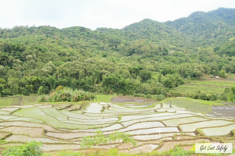 Rice field ende