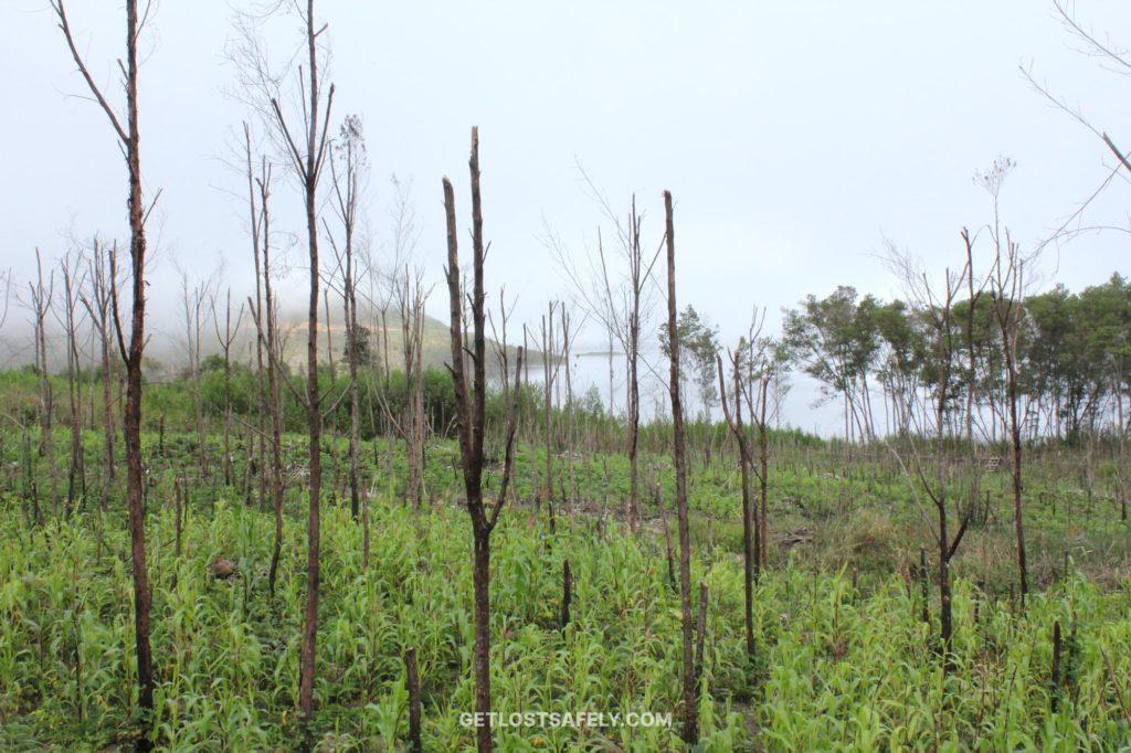 Kebun jagung warga Kampung Kobrey di dekat Danau Anggi Giji